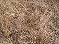 High old dry grass.jpg