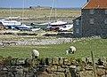 Holy Island, Northumberland - geograph.org.uk - 1239983.jpg