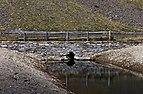Homene Dessus, Combellin, Valle d'Aosta 006.jpg