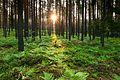 Hommik metsas.jpg