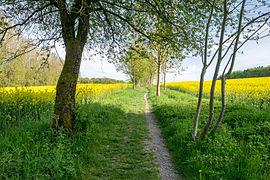 Horn-Bad Meinberg - 2015-05-10 - LSG-4118-0001 (26).jpg