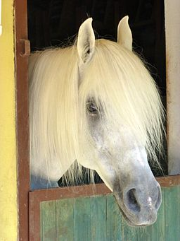Horse 1100758