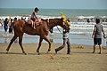 Horse Riding - New Digha Beach - East Midnapore 2015-05-01 8682.JPG