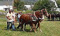 Horse pulling competition Sheffield Field Day 2017 Vermont 01.jpg