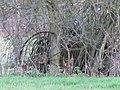 Horse rake - geograph.org.uk - 1639858.jpg