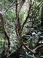 Horton Plains National Park 123.JPG