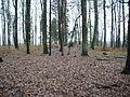 Huegelgrab Eppingen 2.jpg