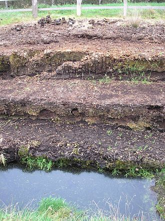 Raised bog - Layering of a raised bog: plant remains, white peat and black peat (from the top)