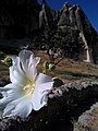 I fiori del male - panoramio.jpg
