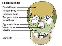 definition of maxilla
