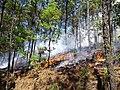 Incendio en RBSM.jpg