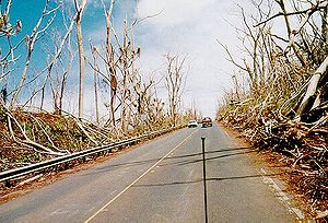 Hurricane Iniki - Wind damage to trees from Iniki