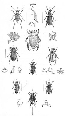Insects Plate 1 (Discoveries in Australia).jpg