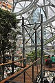 Inside the Amazon Spheres (40531820014).jpg