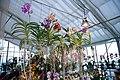 Internationale Orchideen- und Tillandsienschau Blumengärten Hirschstetten 2016 g.jpg