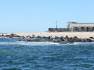 Lobos Islands in Punta del Este, Uruguay.