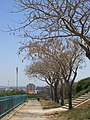 Israel, Ashdod, Giv'at-Yona. אשדוד - panoramio (1).jpg