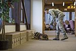 JBER military working dog teams hone their capabilities during annual certification 161014-F-YH552-031.jpg