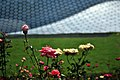 Jardín de rosas del Museo Soumaya.jpg