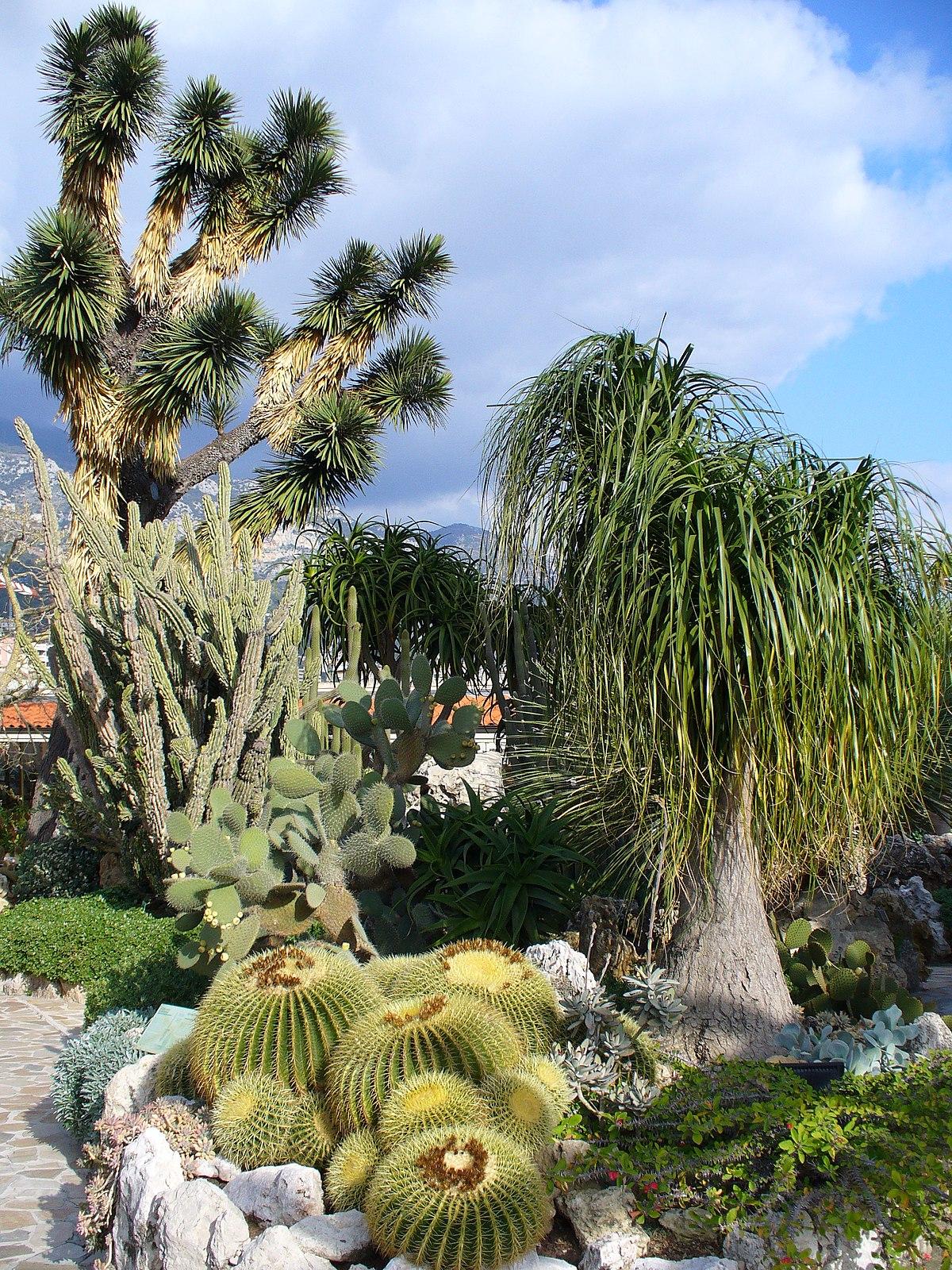 Jardin exotique de Monaco - Wikipedia, wolna encyklopedia