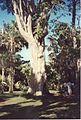 Jardin de Pamplemousses (3000882973).jpg