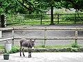 Jugendfarm Sindolino - panoramio.jpg