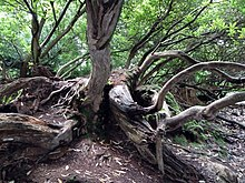 Jungle - The Lost Gardens of Heligan (9757755226).jpg