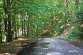 Kamenice, Ládeves, forest.jpg
