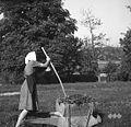 Karjola (samokolnica) za gnoj vozit, Glogovica 1950 (2).jpg