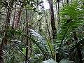 Kinabalu Park, Ranau, Sabah, Malaysia - panoramio (7).jpg