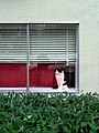 Kitty on the sill (362063390).jpg
