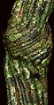 Knotted Vine (20981564275).jpg