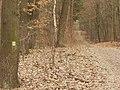 Koenigswald - Forstweg (Forest Track) - geo.hlipp.de - 34695.jpg