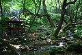 Koleshinski vodopad 39.JPG