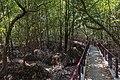 Krabi - Mangrovenwanderweg - 0005.jpg