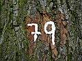 Kranenburg Rütterswall PM18-05.jpg