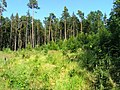 Kunratický Forest Centr 12, Prague.jpg