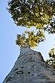 LSG Kühlung - Nienhäger Holz (Gespensterwald) - Blick nach oben (16).jpg