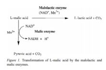 Lactic acid transformation from malic acid.png