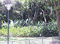 Lagos Parque del Este 001.JPG