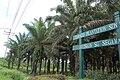 Lahad Datu Tamaco Plantation.jpg