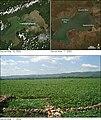 Lake Victoria Hyacinth.jpg
