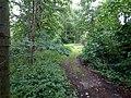 Landschaftsschutzgebiet Warmenau-Ufer LSG OS 00019 Datei 29.jpg