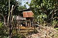 Laos, plantations sur le Plateau des Bolovens, (6).jpg