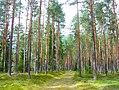 Latvian Forest Tomes pagasts, Ķeguma novads, Latvia.jpg