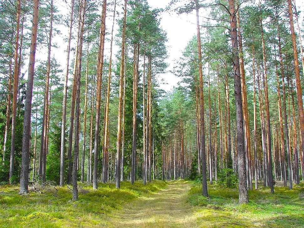 Latvian Forest Tomes pagasts, %C4%B6eguma novads, Latvia