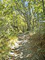 Le Cavallaie-paesaggio 44.jpg