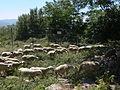 Le Pouzin - Couvent des chèvres (Abbaye Saint-Pierre de Rompon) 08.JPG