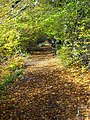 Leaf Covered Path in Calderglen - geograph.org.uk - 1022161.jpg