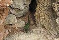 Leuca Stone Wall with Green Lizard - panoramio.jpg